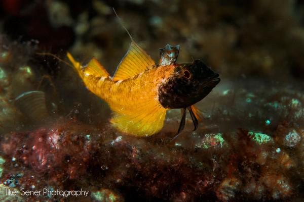 Ayvalık Resif 3.jpg