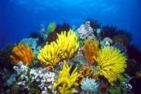 Ayvalık Resif 8.jpg