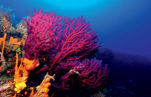 Ayvalık Resif 9.jpg