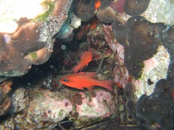 Ayvalık Resif 12.jpg
