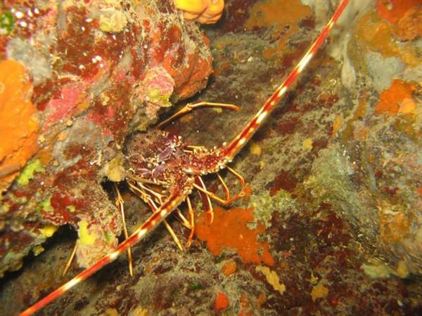 Ayvalık Resif 14.jpg