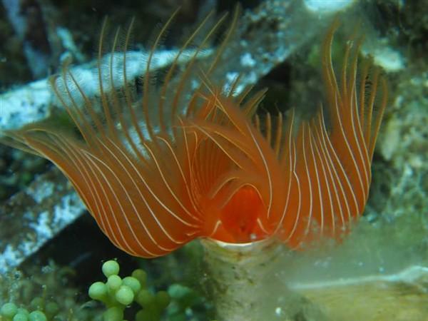 Ayvalık Resif 17.jpg