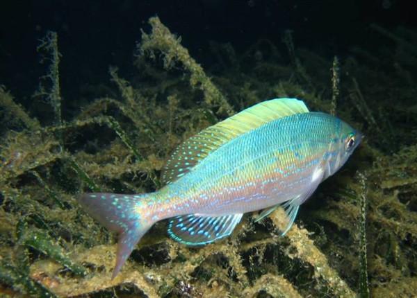 Ayvalık Resif 19.jpg