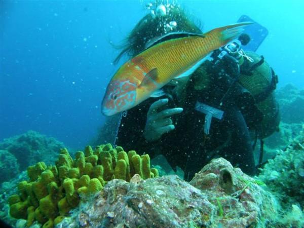 Ayvalık Resif 22.jpg