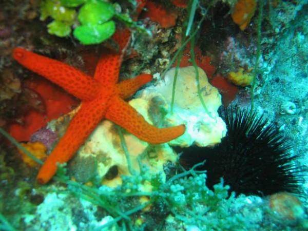 Ayvalık Resif 23.jpg