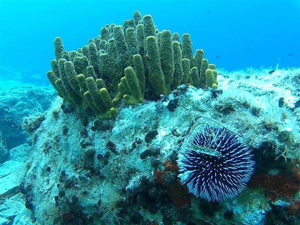 Ayvalık Resif 27.jpg