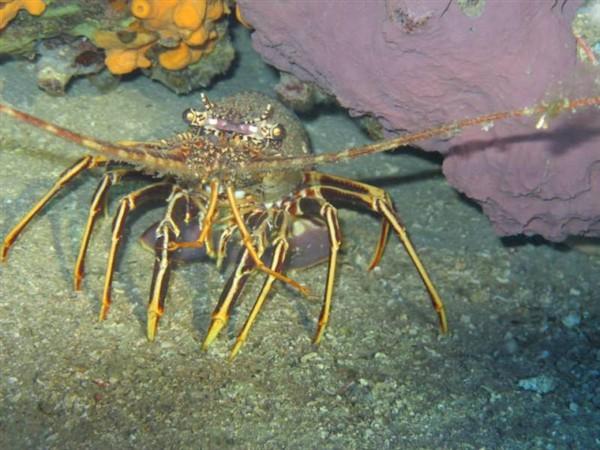 Ayvalık Resif 29.jpg