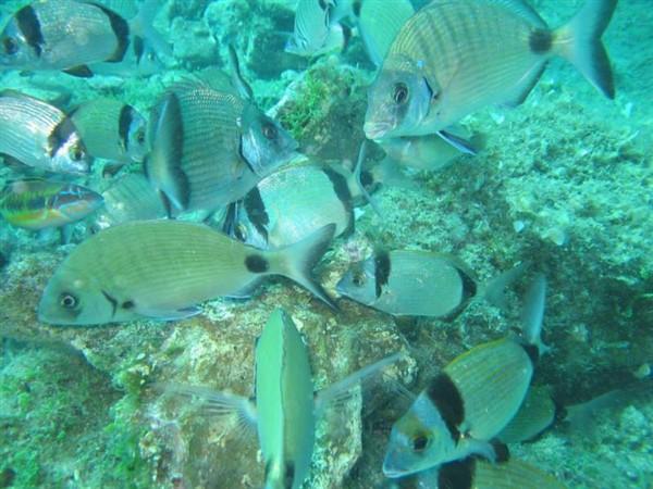 Ayvalık Resif 30.jpg