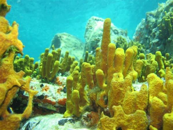 Ayvalık Resif 34.jpg