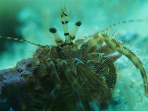 Ayvalık Resif 37.jpg