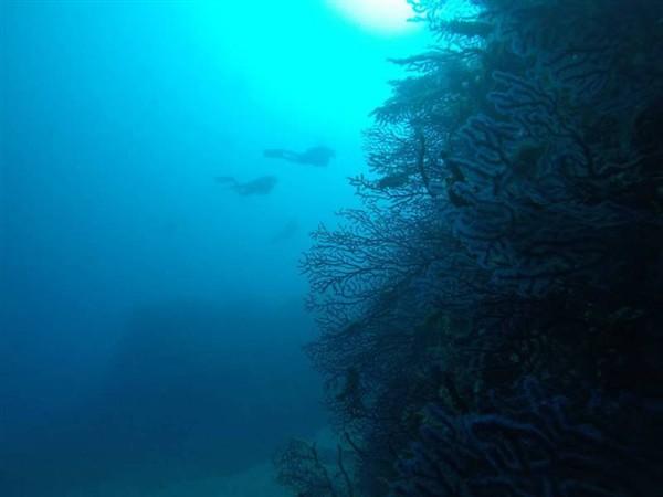 Ayvalık Resif 44.jpg
