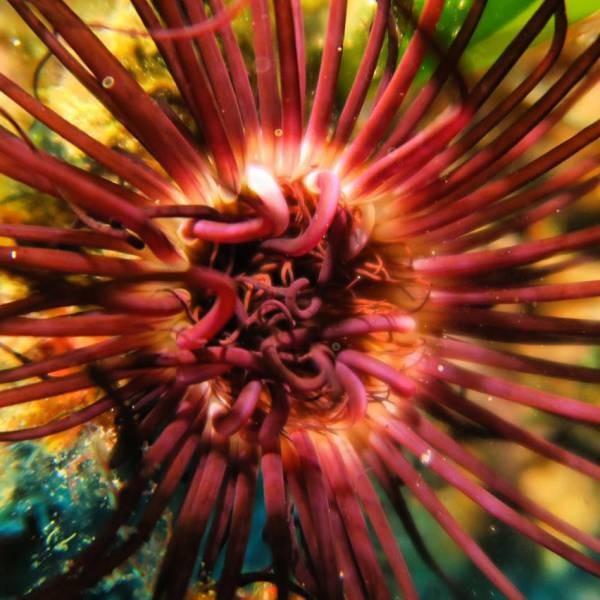 Ayvalık Resif 52.jpg