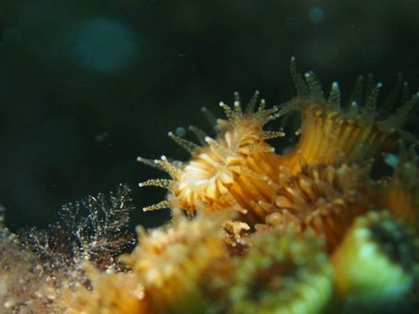 Ayvalık Resif 54.jpg