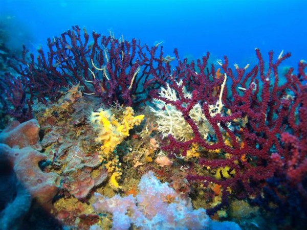 Ayvalık Resif 57.jpg