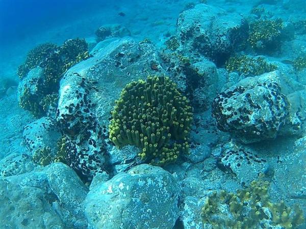 Ayvalık Resif 58.jpg