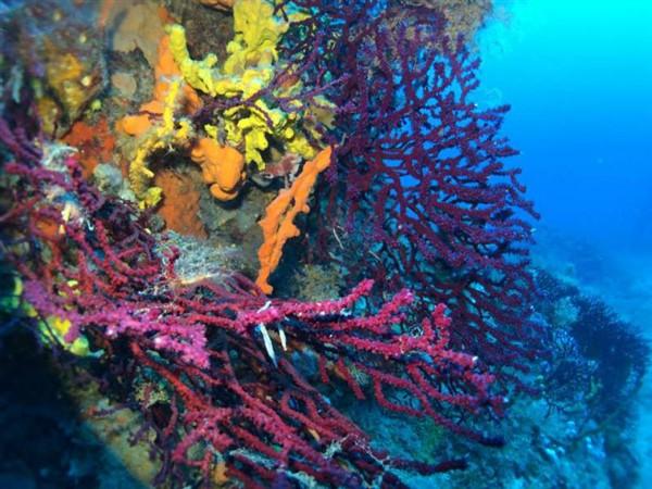 Ayvalık Resif 59.jpg