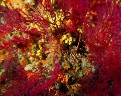 Ayvalık Resif 61.jpg