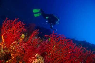 Ayvalık Resif 65.jpg