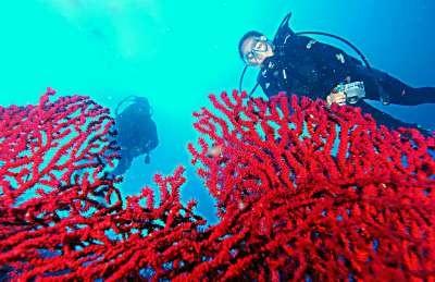 Ayvalık Resif 68.jpg