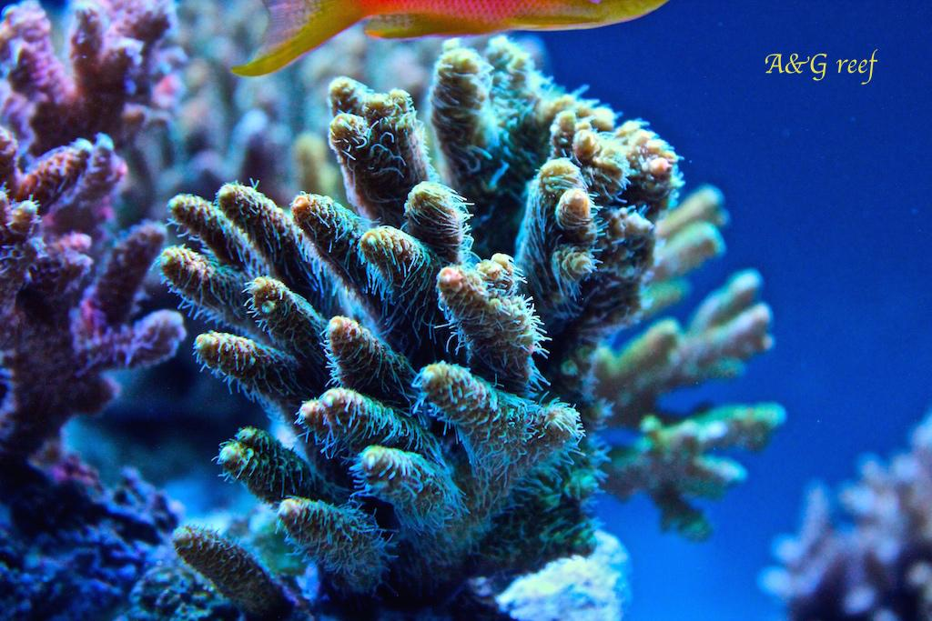 A&G reef