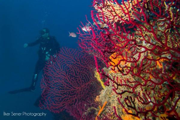 Ayvalık Resif 1.jpg