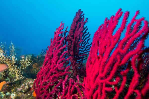 Ayvalık Resif 2.jpg