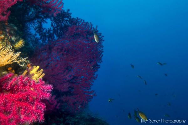 Ayvalık Resif 4.jpg