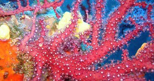 Ayvalık Resif 6.jpg