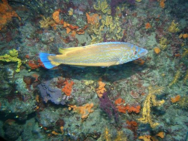 Ayvalık Resif 10.jpg