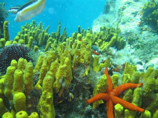 Ayvalık Resif 21.jpg