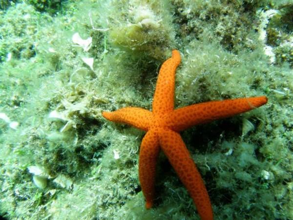 Ayvalık Resif 24.jpg
