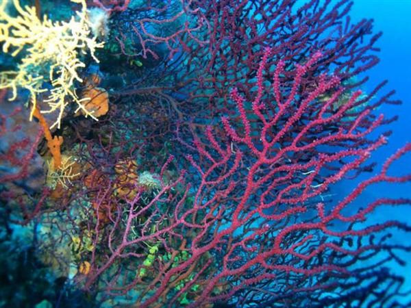 Ayvalık Resif 26.jpg