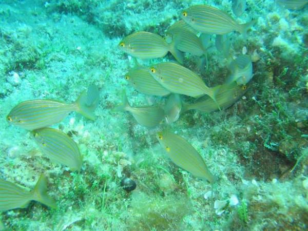 Ayvalık Resif 28.jpg