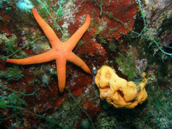 Ayvalık Resif 39.jpg