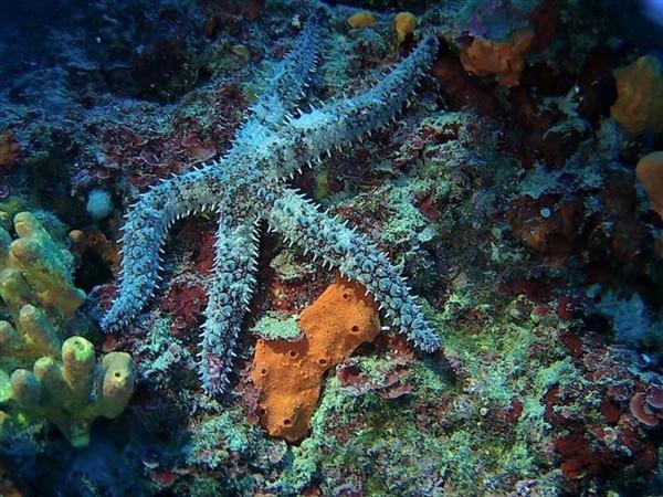 Ayvalık Resif 41.jpg