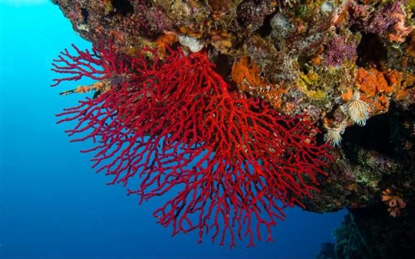 Ayvalık Resif 47.jpg