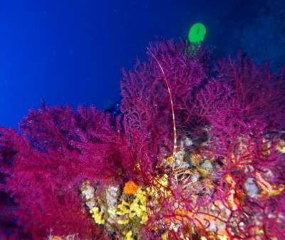 Ayvalık Resif 62.jpg