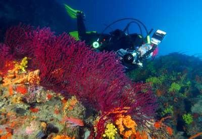 Ayvalık Resif 64.jpg