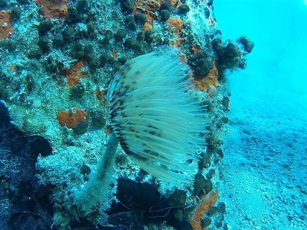 Ayvalık Resif 67.jpg