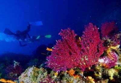 Ayvalık Resif 69.jpg